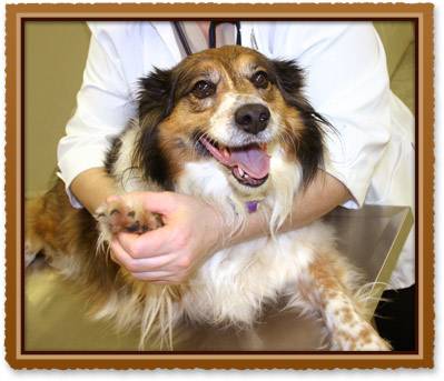 pet wellness in midlothian